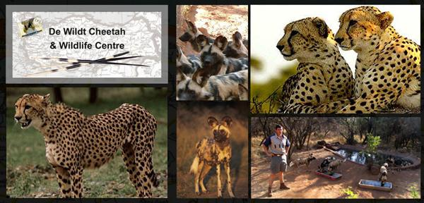 de-wildt-cheetah-breeding-centre-and-elephant-sanctuary